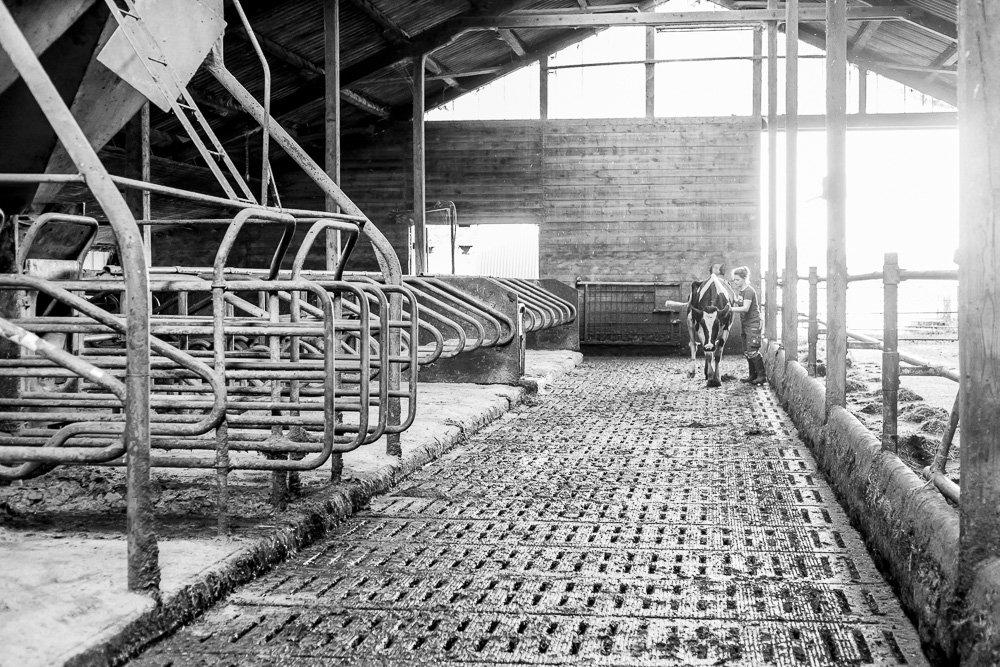 40 Stunden - Sonja begleitet eine Kuh aus dem Stall