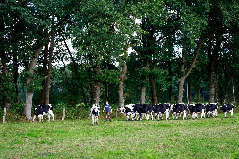 40 Stunden - Sonja mit den Kühen auf der Weide
