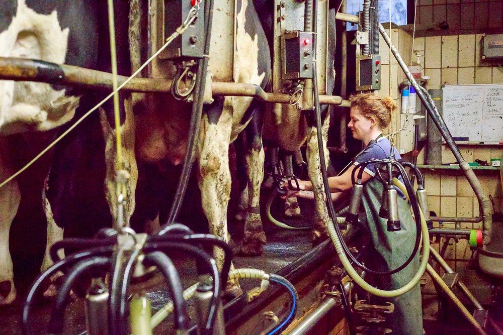 40 Stunden - Sonja setzt Melkgeschirr an